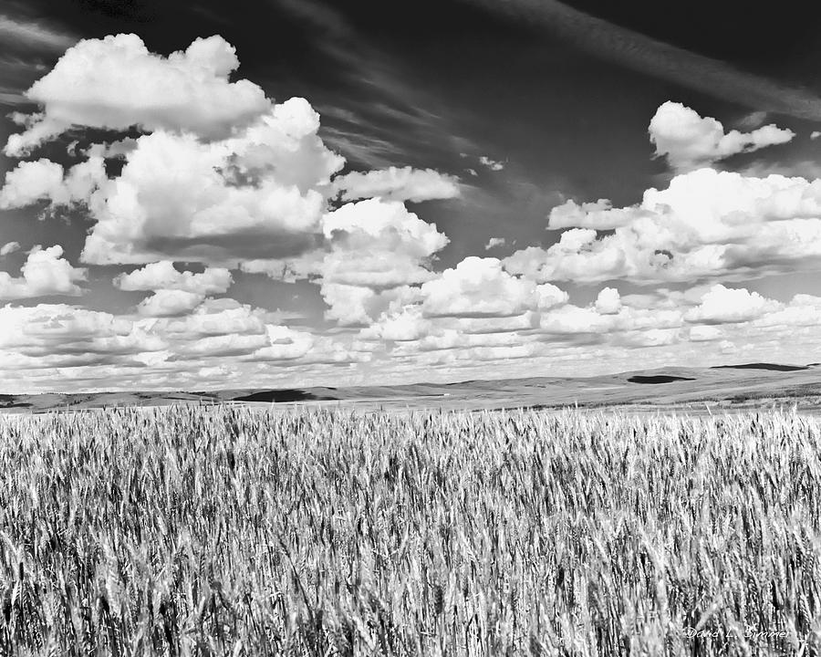 Landscape Photograph - Washington Wheat by David Simmer