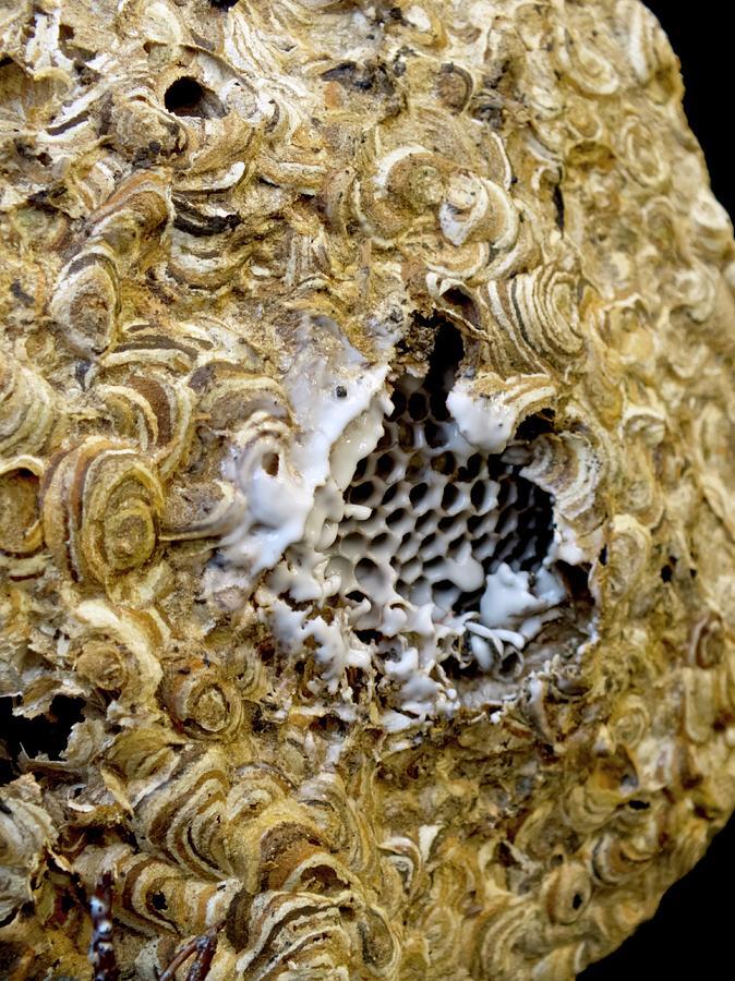 wasp nest spray - 674×900