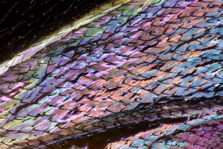 Anatomy Photograph - Wasp Wing by Science Photo Library