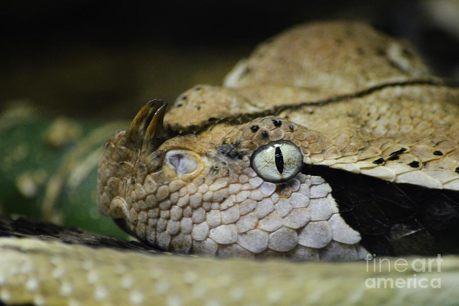 Snake Photograph - Watch Out  by Rachel Barrett