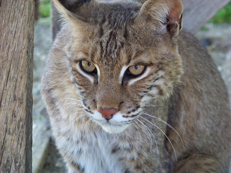Wildlife Photograph - Watchfull Eyes by Jennifer  King