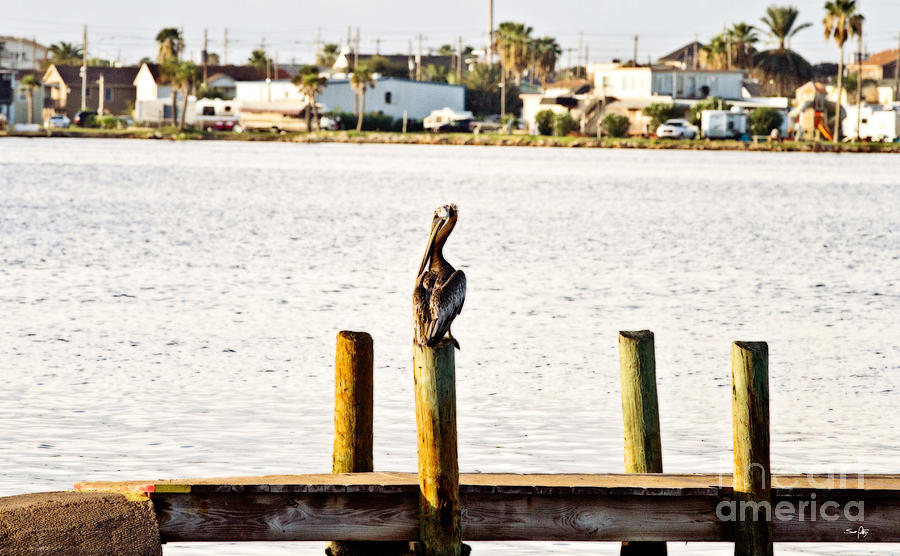 Bay Photograph - Watching Over The Bay by Scott Pellegrin