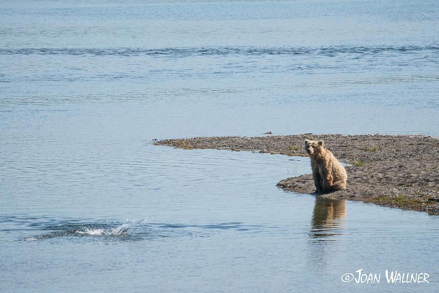 Alaska Photograph - Watching the Salmon Jump by Joan Wallner