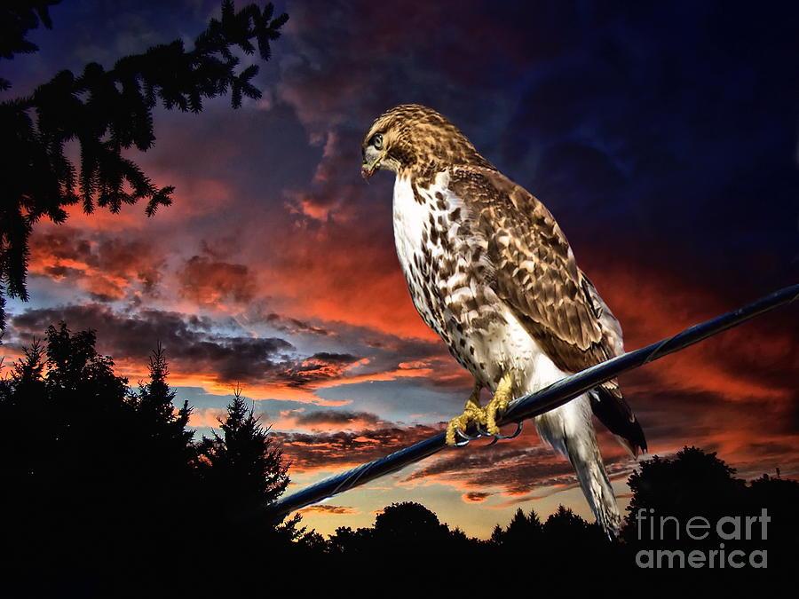 Bird Of Prey Photograph - Watching The Sun Set by Andrea Kollo