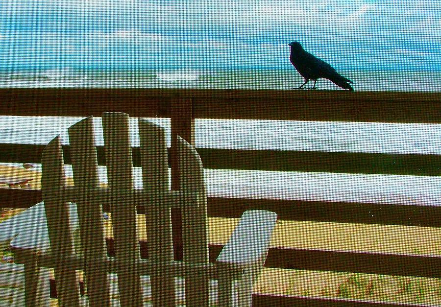 Blackbird Photograph - Watching The Waves by Julie Dant