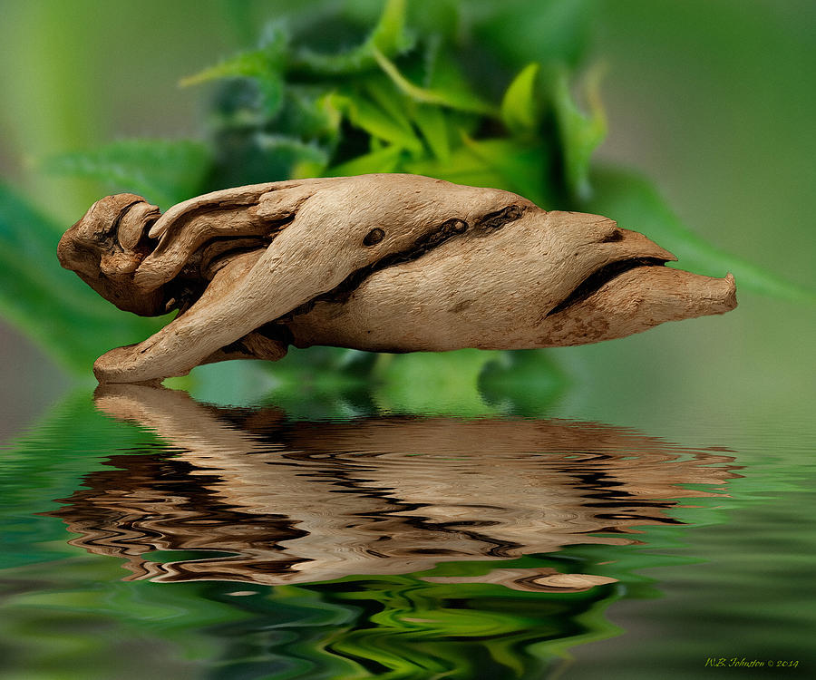 Water Photograph - Water Balance by WB Johnston