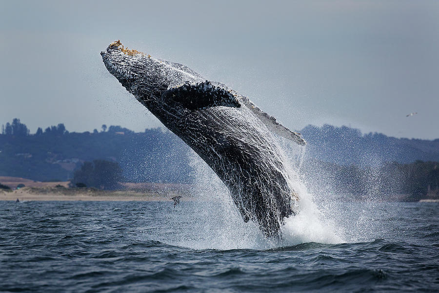 Water Ballet Photograph by Chase Dekker Wild-life Images