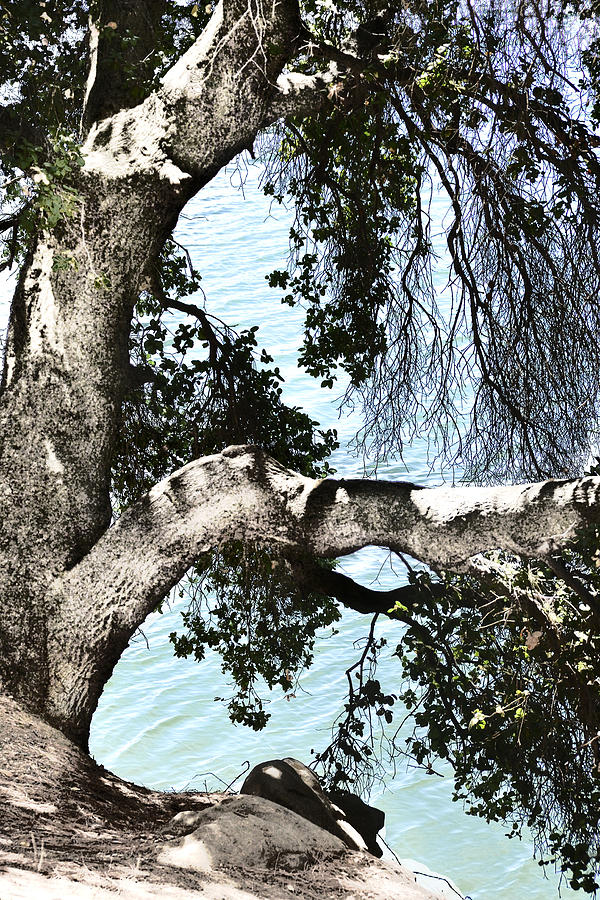 Del Valle Photograph - Water Beyond The Tree by Karen  W Meyer