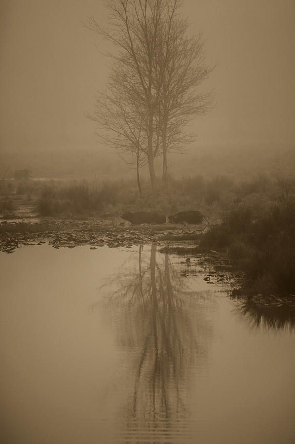 Sepia Portrait Photograph - Water Buffalo Morning Fog by Frank Feliciano