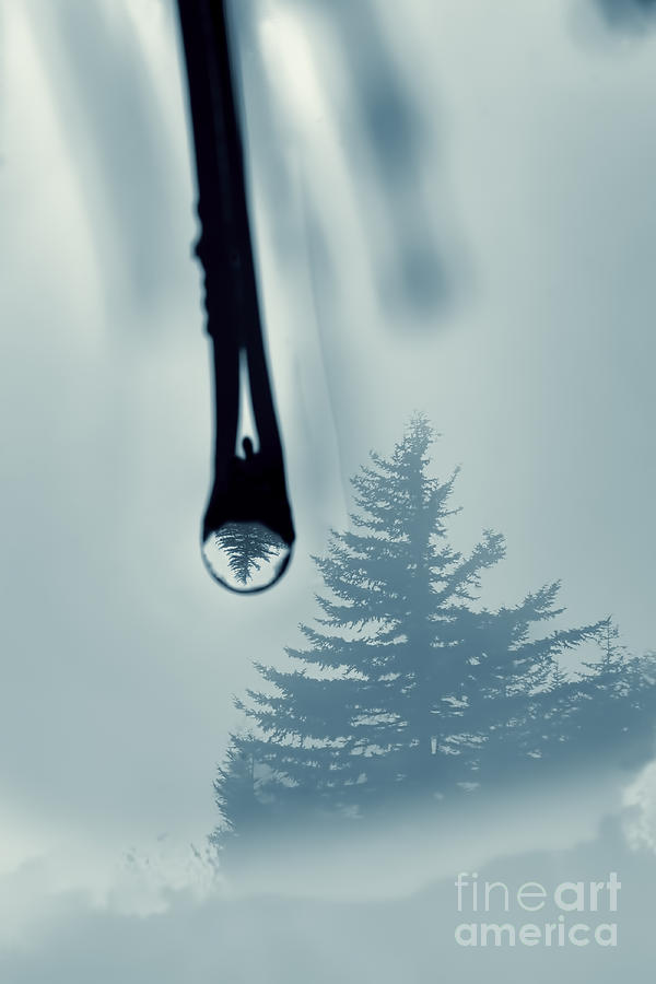 Water Drop Photograph - Water Drop With Tree Reflection by Dan Friend