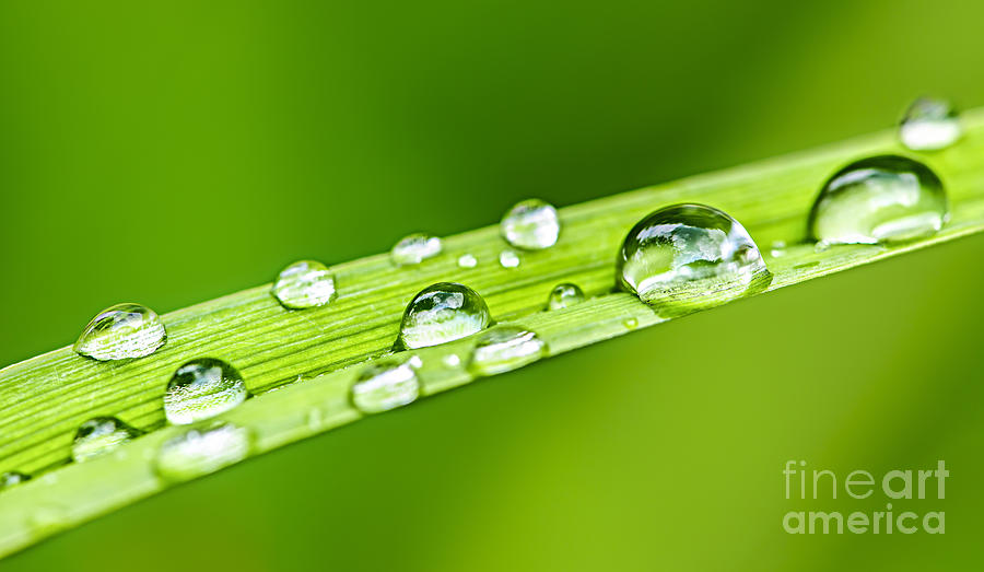 Drop Photograph - Water Drops On Grass Blade by Elena Elisseeva