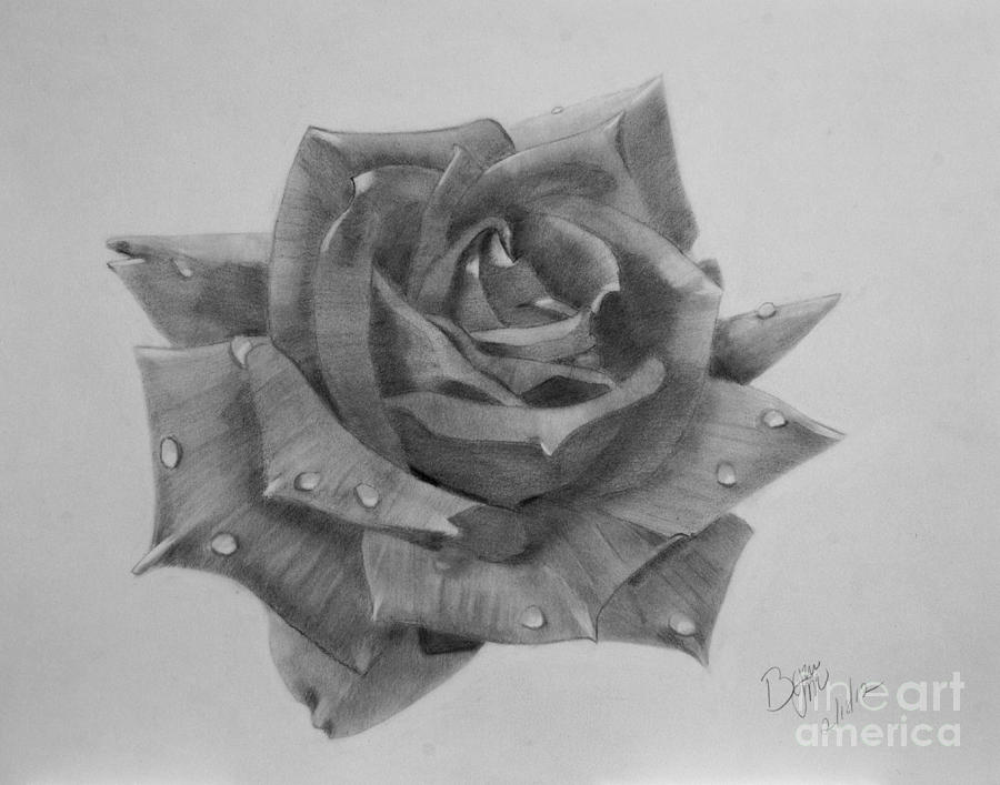 Water Drops On Rose Drawing By Byron Moss