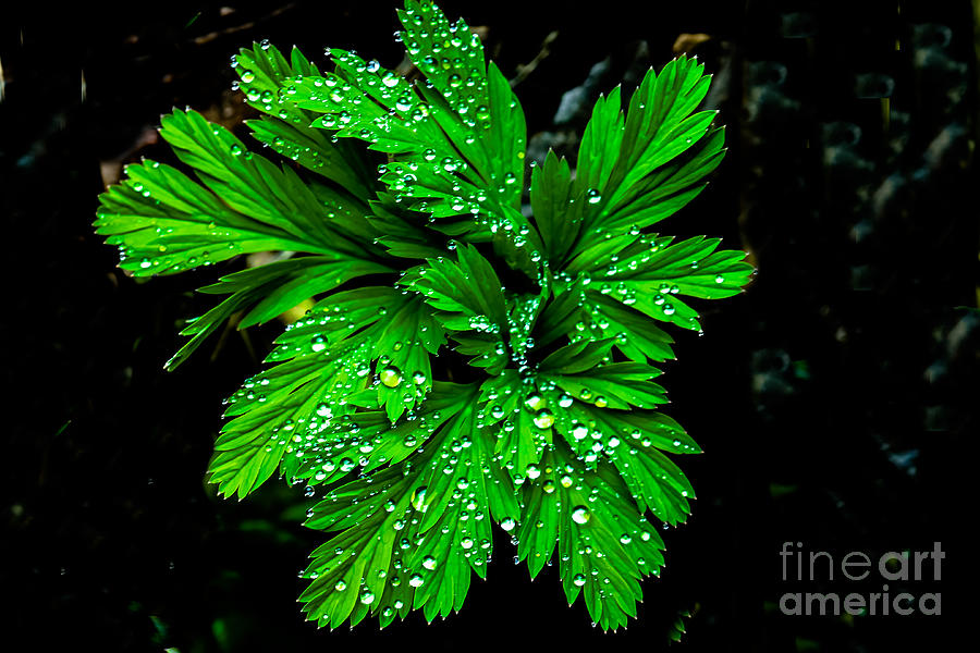Leaf Photograph - Water Drops by Robert Bales