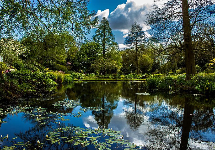 Water Garden Photograph - Water Garden by Martin Newman