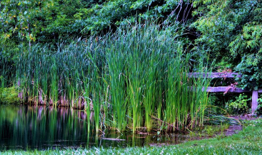 water garden plants photograph water garden plants by dan sproul - Water Garden Plants