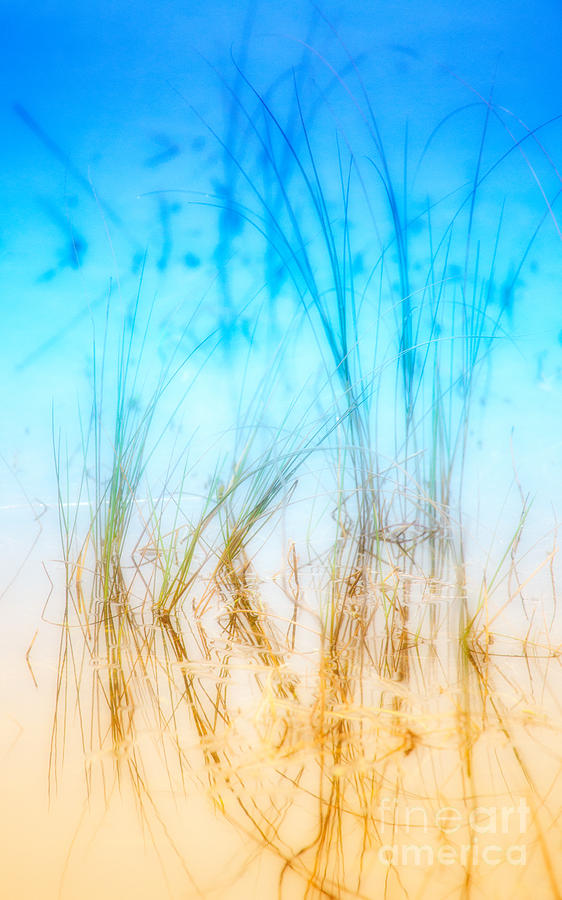 Outer Banks Photograph - Water Grass - Outer Banks by Dan Carmichael