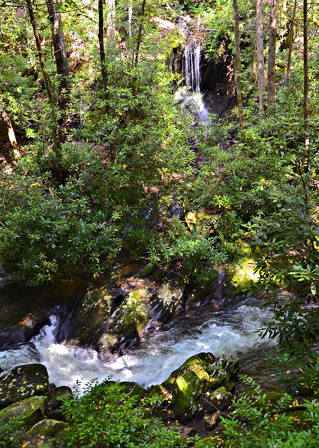 Hiking Photograph - Water In The Forest by Susan Leggett