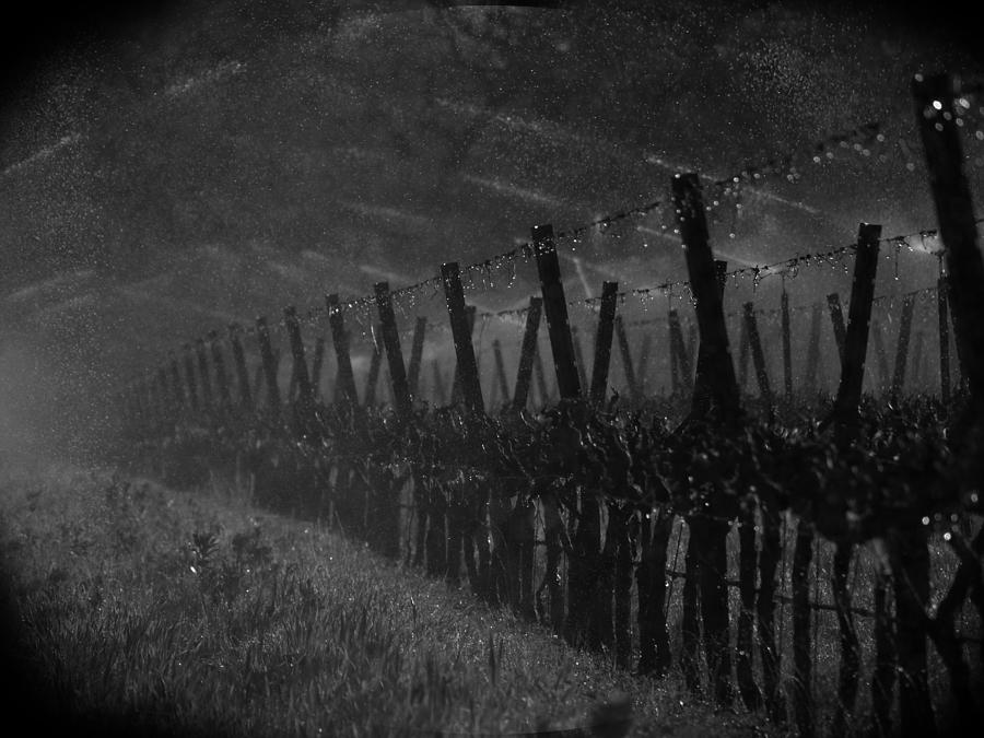Winery Photograph - Water Into Wine by Bill Gallagher