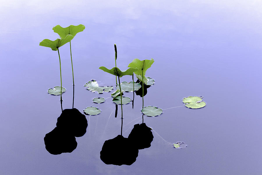 Lilies Photograph - Water Lilies by Adam Kilbourne
