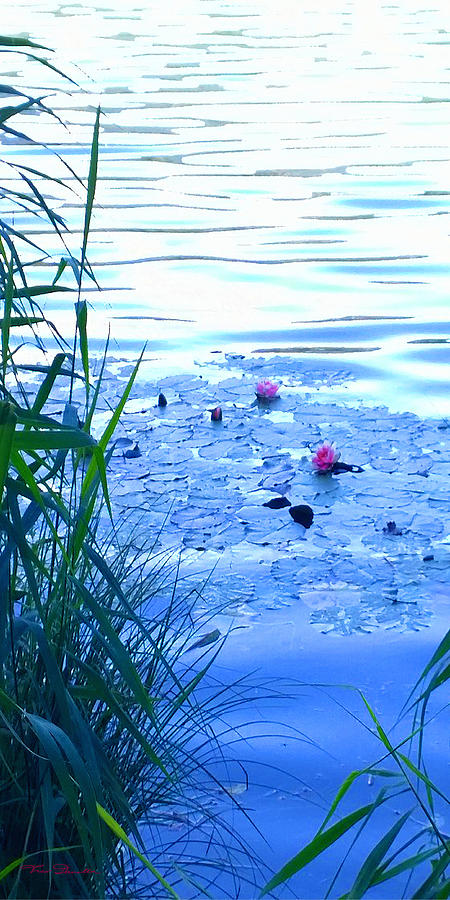 Landscape Photograph - Water Lilies Blue by Theo Danella