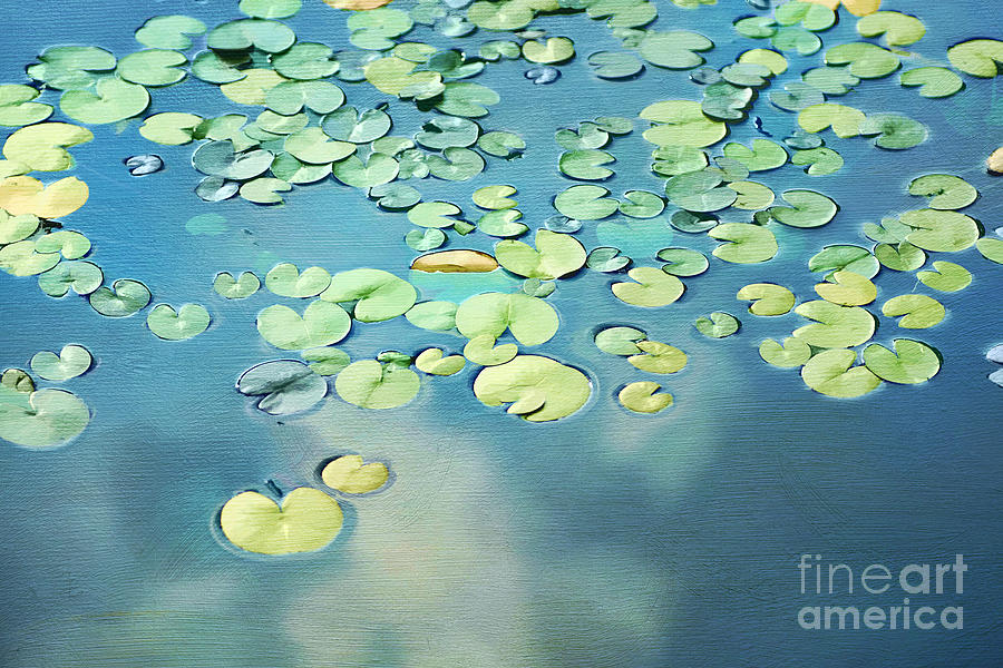 Water Photograph - Water Lilies by Darren Fisher