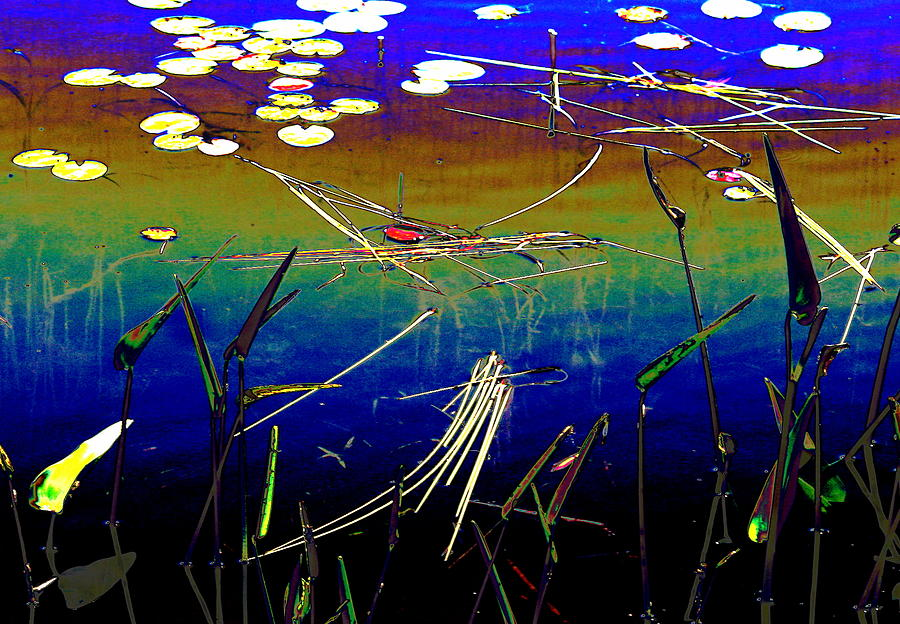 Water Photograph - Water Lillies by Dr Carolyn Reinhart