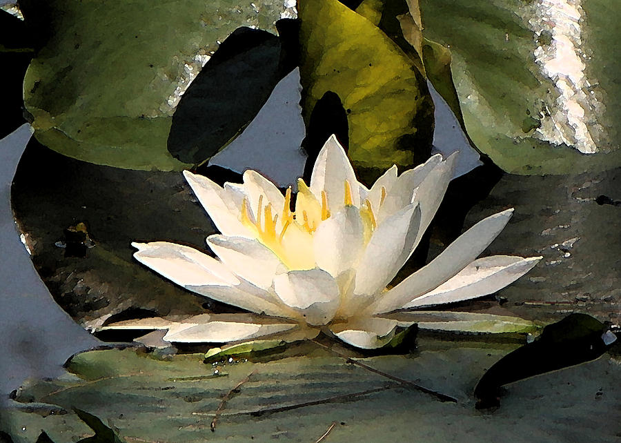 Water Lilly by Jim Baker