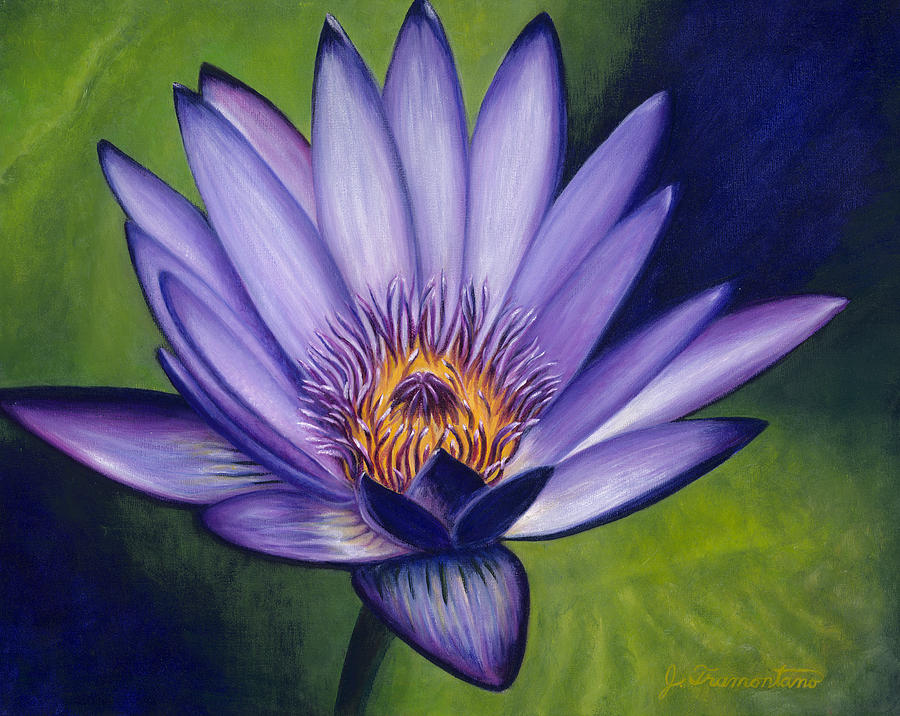 Water Lily 2 by Jeannette Tramontano