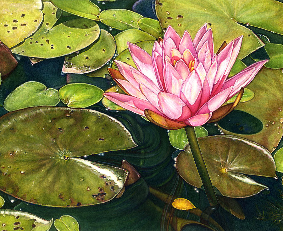 Lily Painting - Water Lily At The Biltmore Gardens by Suzannah Alexander