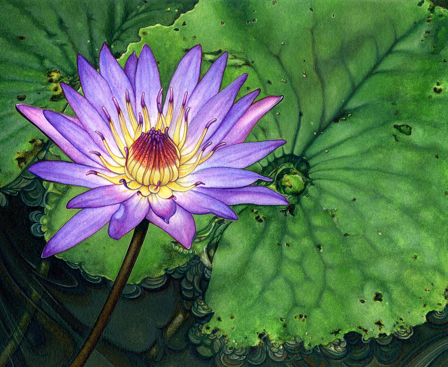 Lily Painting - Water Lily At The Conservatory Of Flowers by Suzannah Alexander