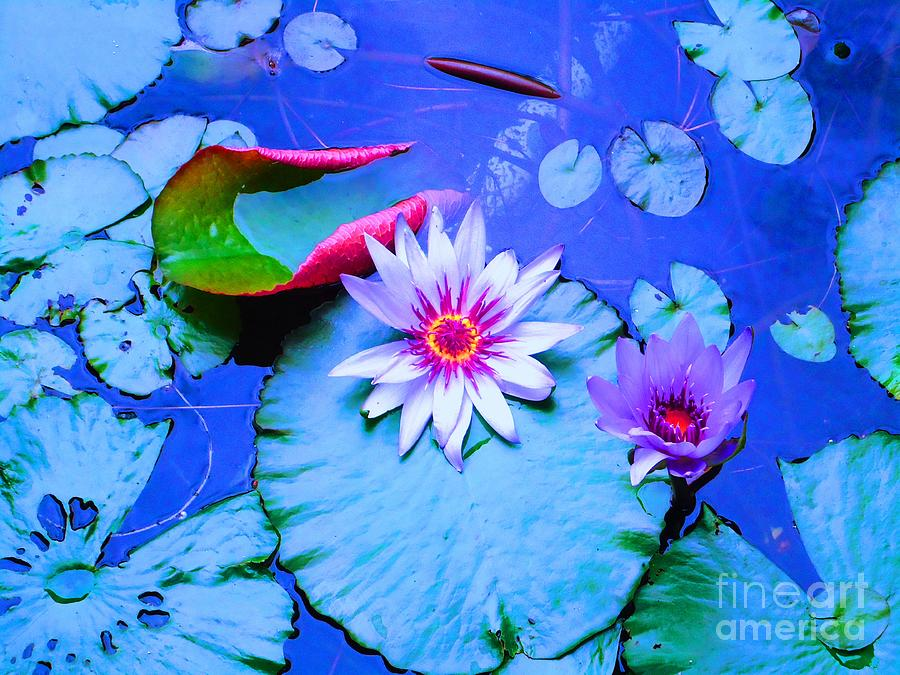 Water Photograph - Water Lily I by Ann Johndro-Collins