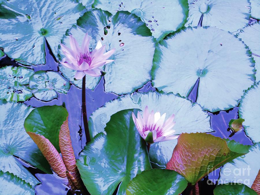 Water Photograph - Water Lily II by Ann Johndro-Collins
