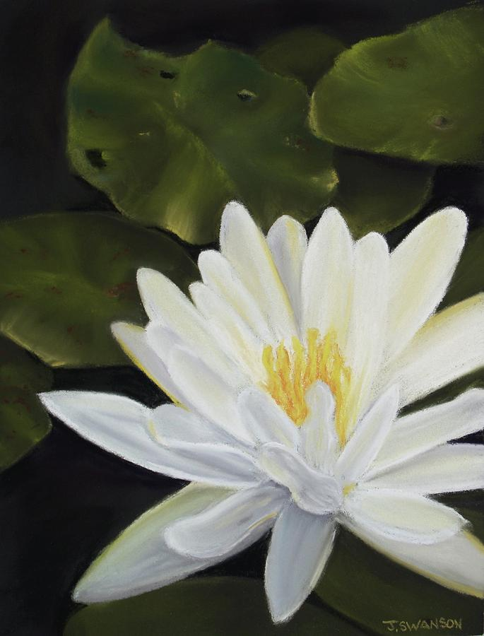 Waterlily Pastel - Water Lily by Joan Swanson