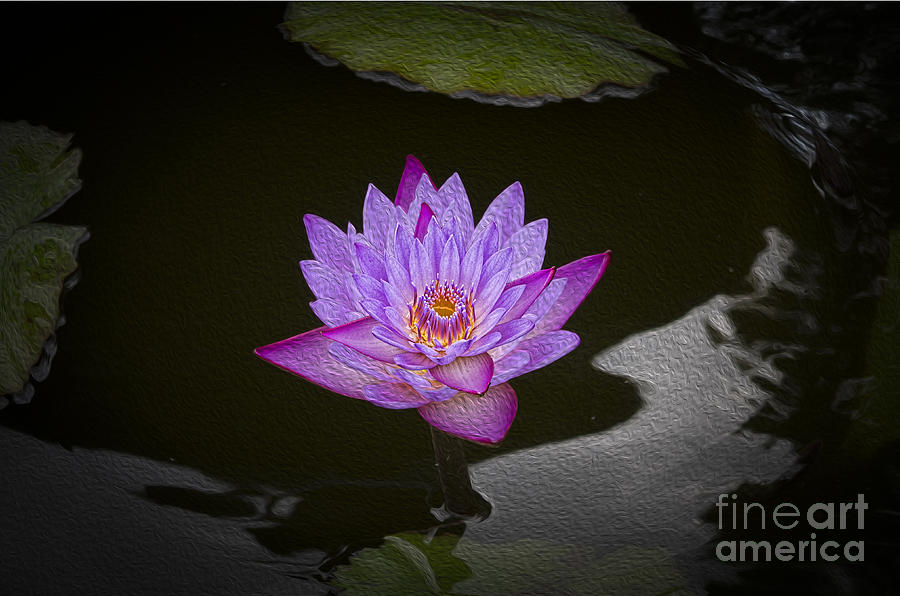Water Lily Photograph - Water Lily by Joe McCormack Jr