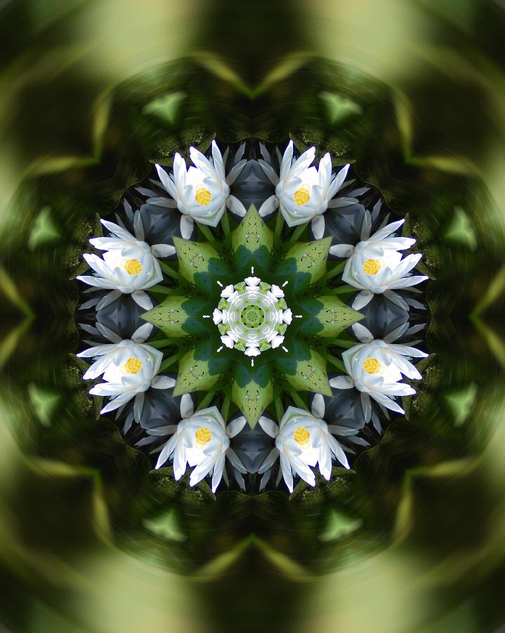 Mandala Photograph - Water Lily Mandala by Peter Kallai