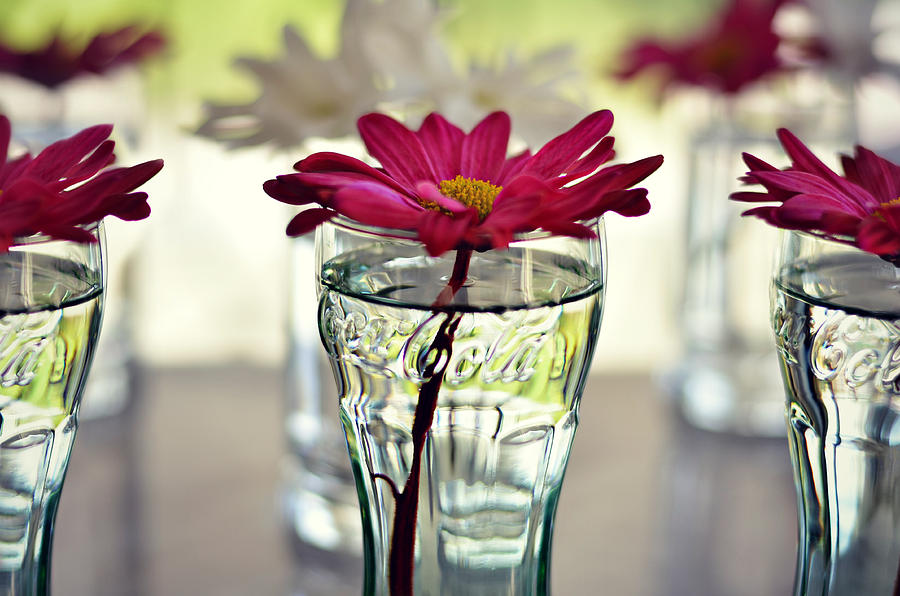 Flower Photograph - Water Lovers by Laura Fasulo