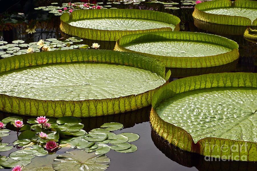 Water Platter Charm by Byron Varvarigos