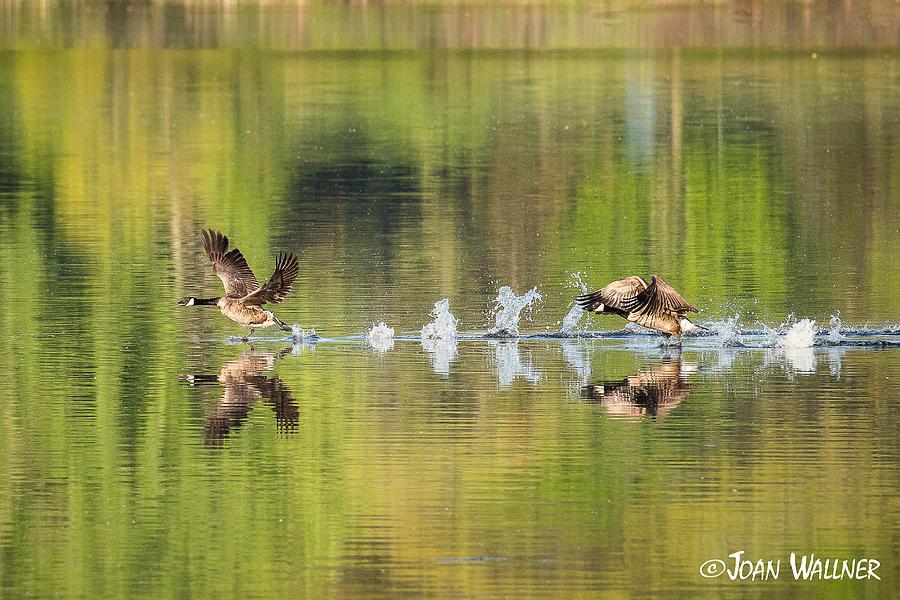 Morning Photograph - Water Runners by Joan Wallner