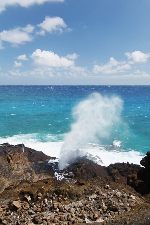 Water Sprays Out Of A Blowhole On The Photograph by Brandon Tabiolo / Design Pics