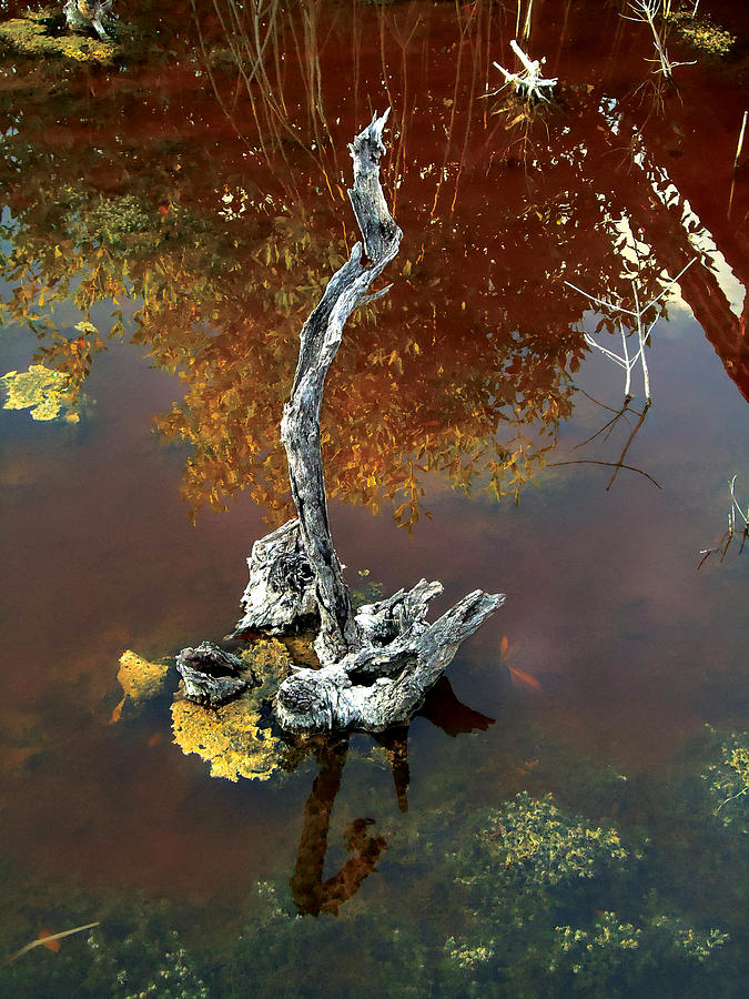 Tree Photograph - Water Stick by Mike Feraco