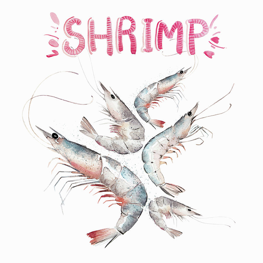 Balanced Painting - Watercolor Painting Of Fresh Shrimps by Ikon Images