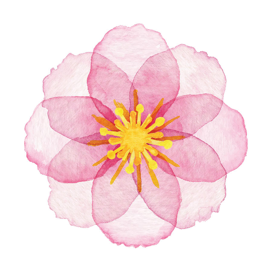 Watercolor Pink Flower Drawing by Saemilee