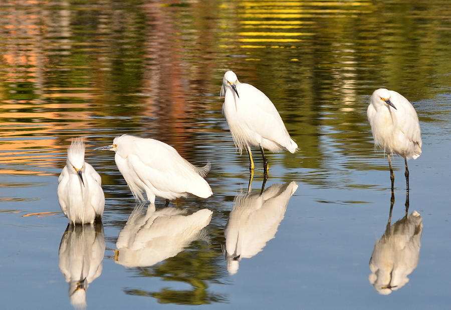 Egrets Photograph - Watercolors In Nature 2 by Fraida Gutovich