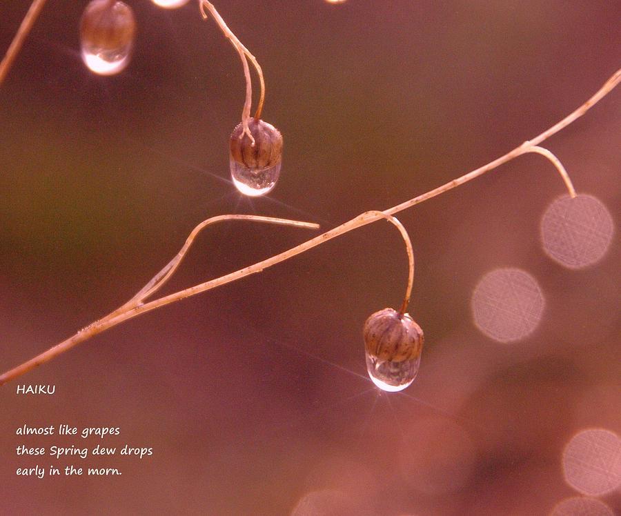 Water Drop Photograph - Waterdrop Haiku by Jeff Swan
