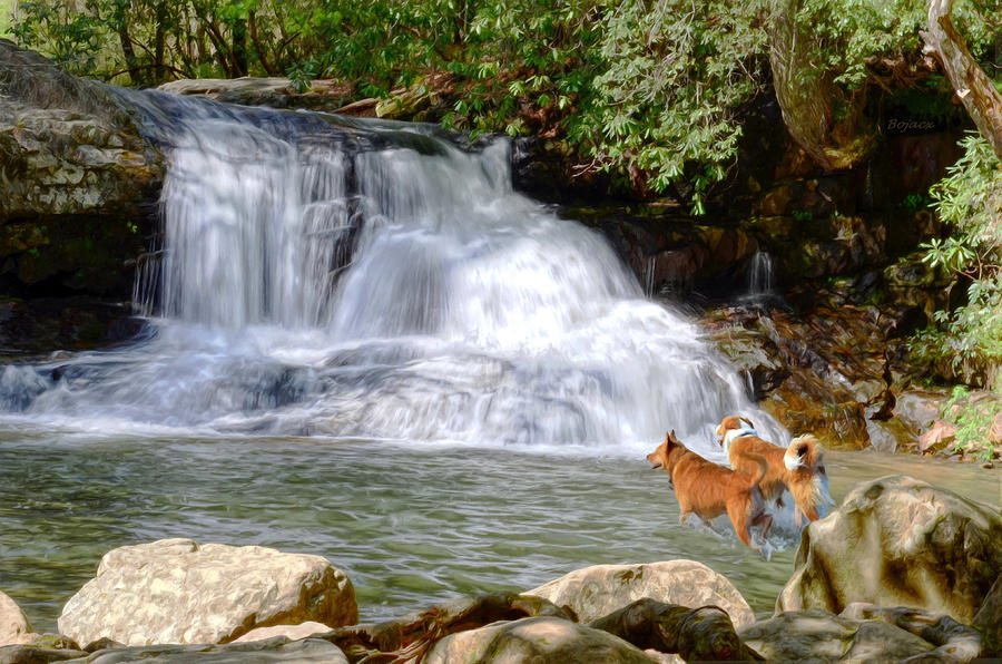 Waterfalls Digital Art - Waterfall Dogs by Bob Jackson