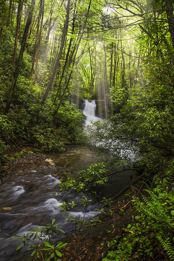 Appalachia Photograph - Waterfall In The Forest by Debra and Dave Vanderlaan