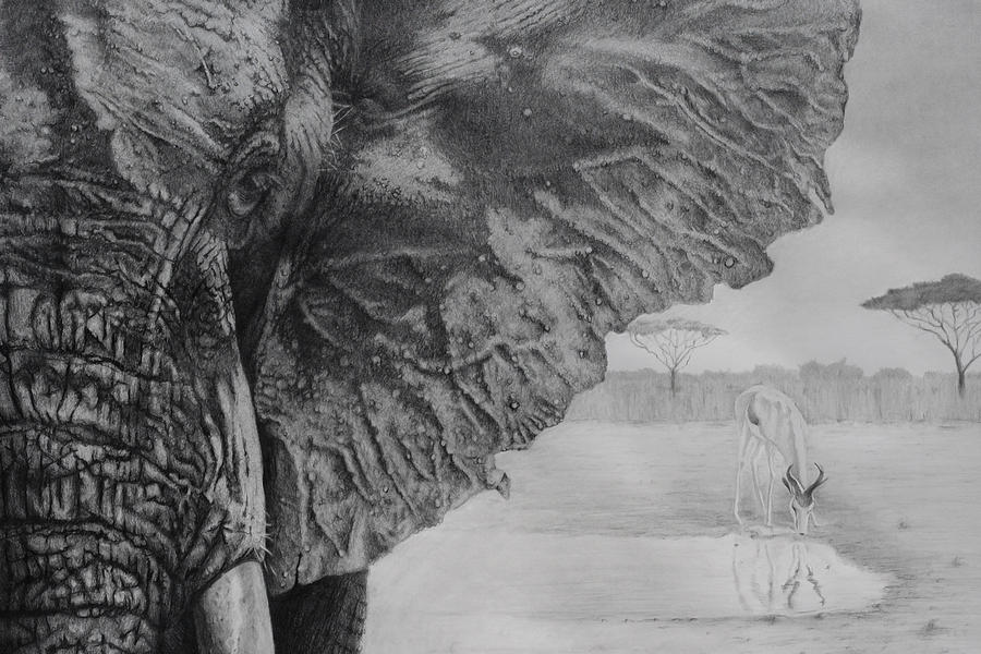 Fathers Day Drawing - Waterhole by Tim Dangaran