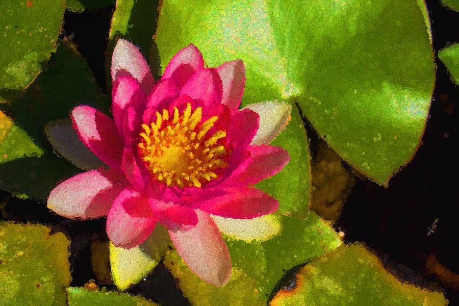 Waterlily Impression in Fuchsia and Pink by Georgia Mizuleva