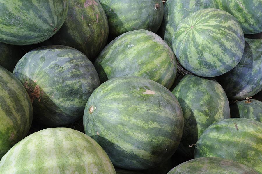 Watermelon Photograph - Watermelons by Bradford Martin