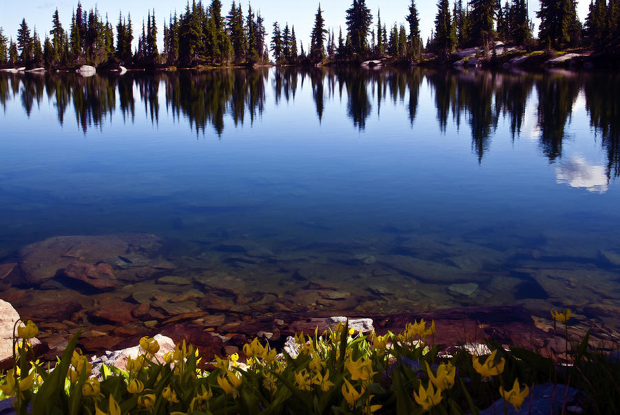 Alpine Lake Photograph - Waters Edge by Randolph Fritz